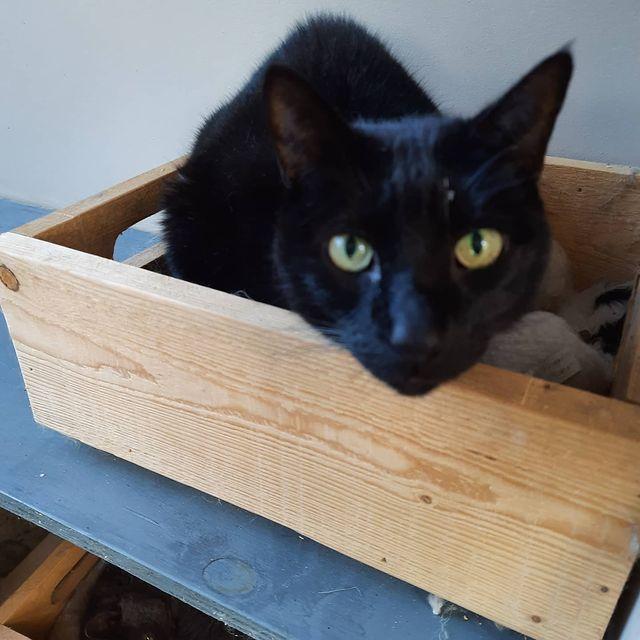 Shadow - Catz at Ashwood
