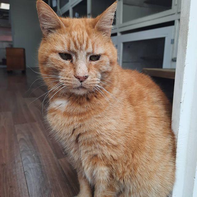 Tiggy - Catz at Ashwood