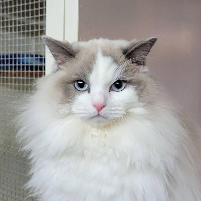 Maisie - Catz at Ashwood